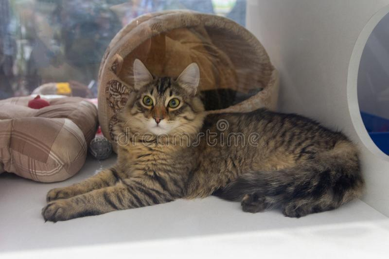 Dakloze kat in de schuilplaats achter het glas stock foto's
