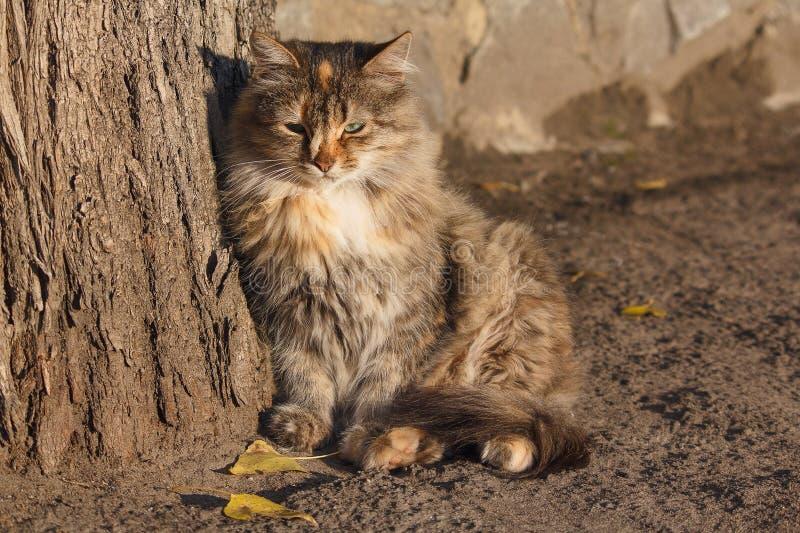 Dakloze kat die in de stralen zonnebaden stock afbeeldingen