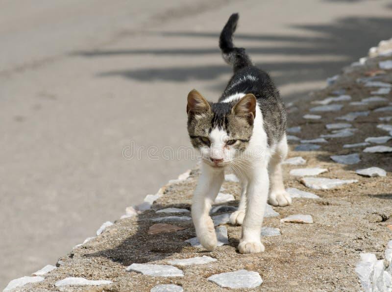 Dakloze kat die voedsel zoekt royalty-vrije stock afbeeldingen