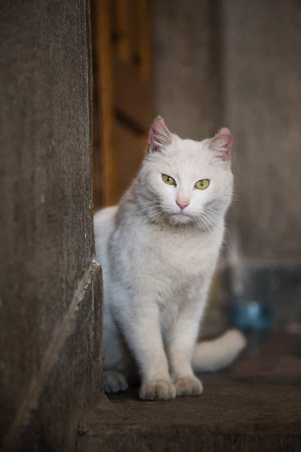 Dakloze kat in een mystiek huis stock afbeeldingen