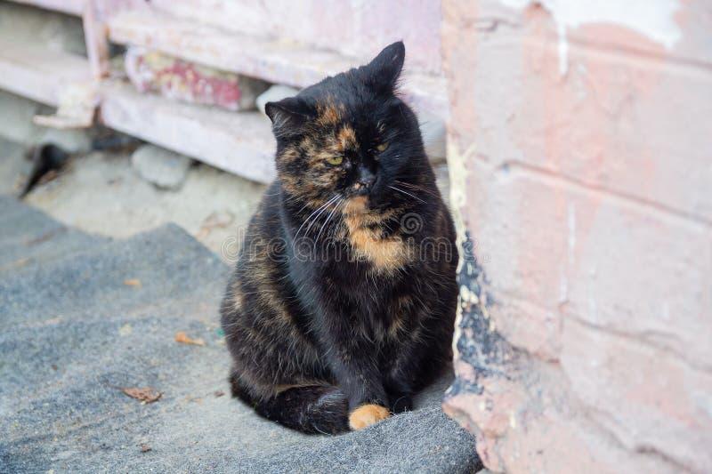 Dakloze kat op een stadsstraat stock foto's