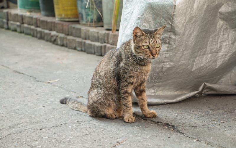 Dakloze kat op straat royalty-vrije stock fotografie