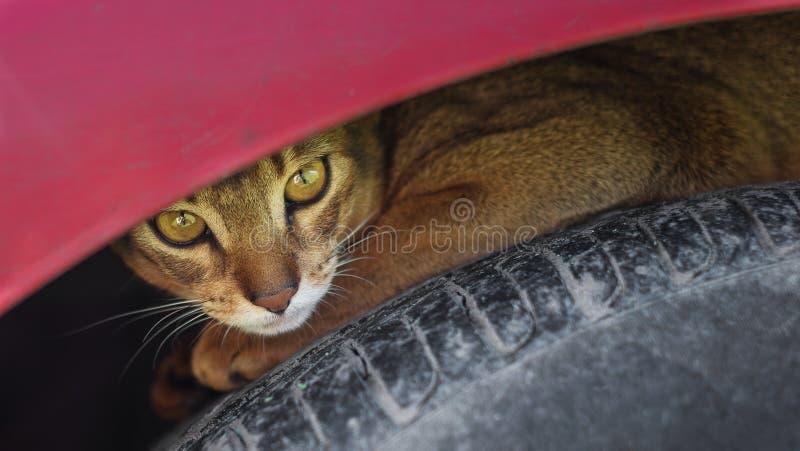 Dakloze kat in openlucht royalty-vrije stock afbeeldingen