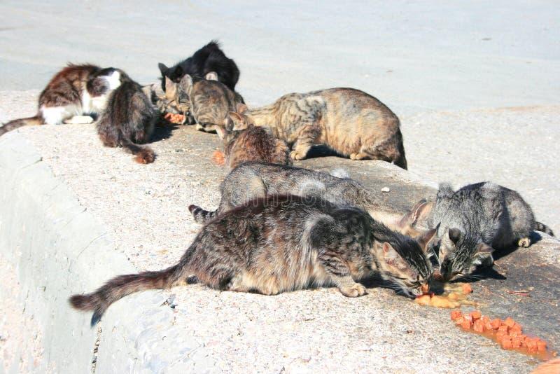 Dakloze katten stock fotografie
