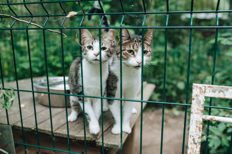Dakloze katten Katjes die uit van achter de bars van zijn kooi kijken royalty-vrije stock afbeelding