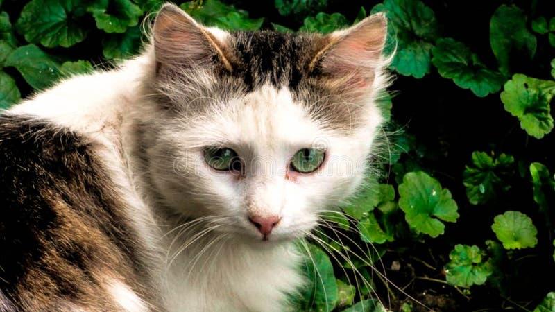 Dakloze kattenrookwolk in de werf stock afbeelding