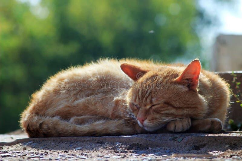 Dakloze kattenslaap op de straat royalty-vrije stock afbeeldingen