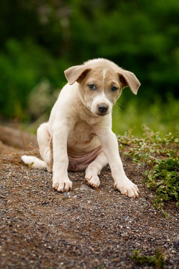Dakloze puppy of Slakkenhond in aard die goedkeuring zoeken stock afbeeldingen