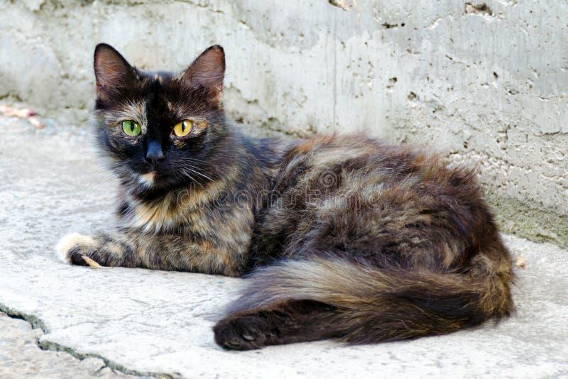 Dakloze rode zwarte kat met ogen van verschillende kleuren stock fotografie