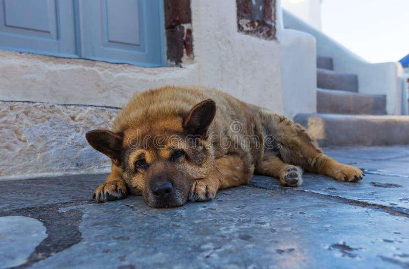 Dakloze ruwharige hond die bij de ingang aan de winkel op de straat in Oia liggen Het eiland van Santorinithira royalty-vrije stock afbeeldingen