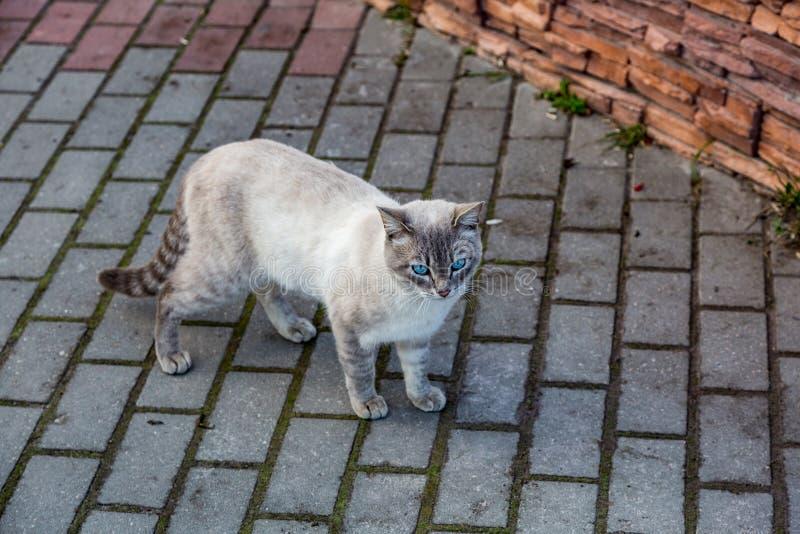Dakloze volwassen kat stock afbeeldingen