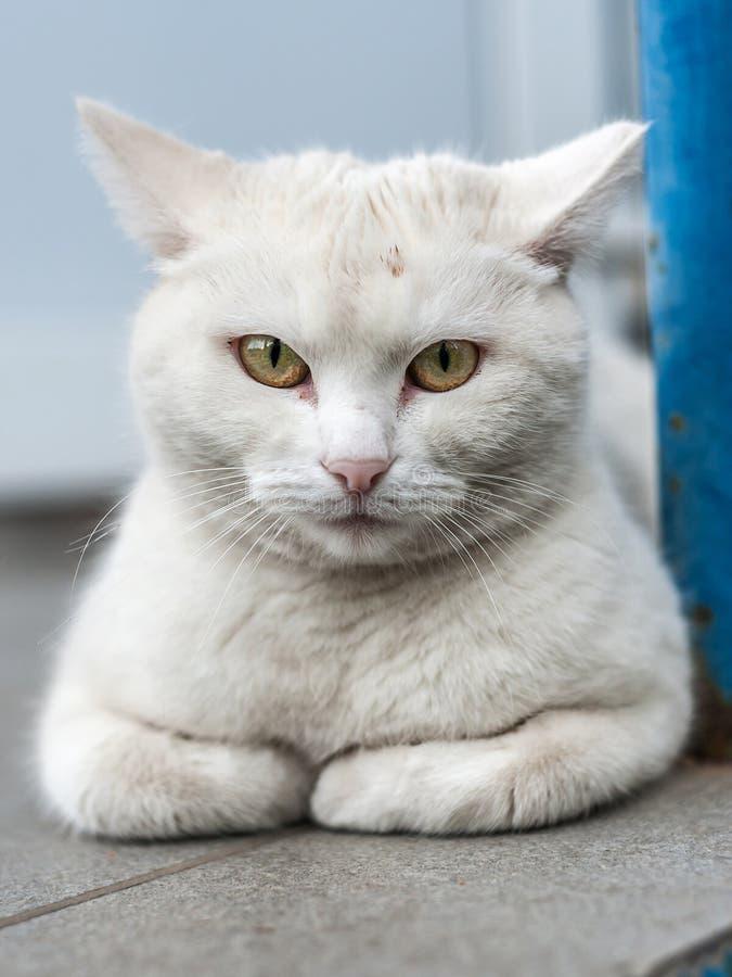 Dakloze volwassen kattenzitting op de straat royalty-vrije stock afbeeldingen