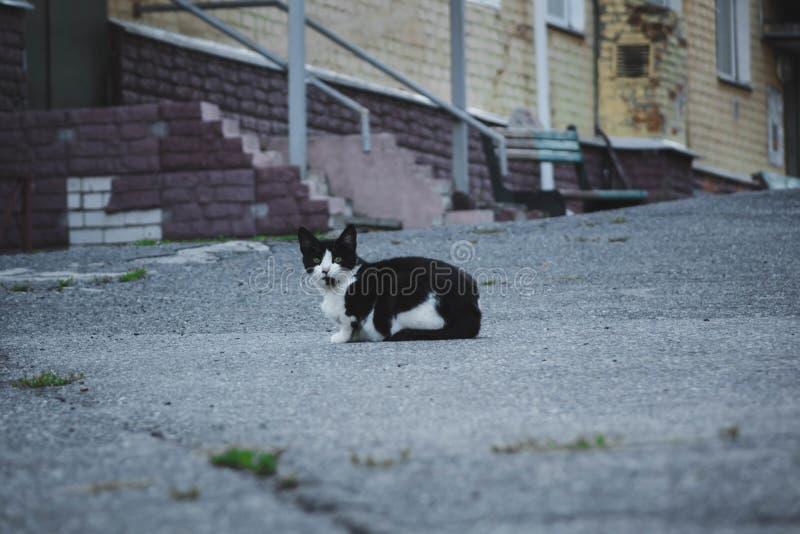Dakloze zwart-witte kat met gele ogen die op de bestrating zitten stock fotografie