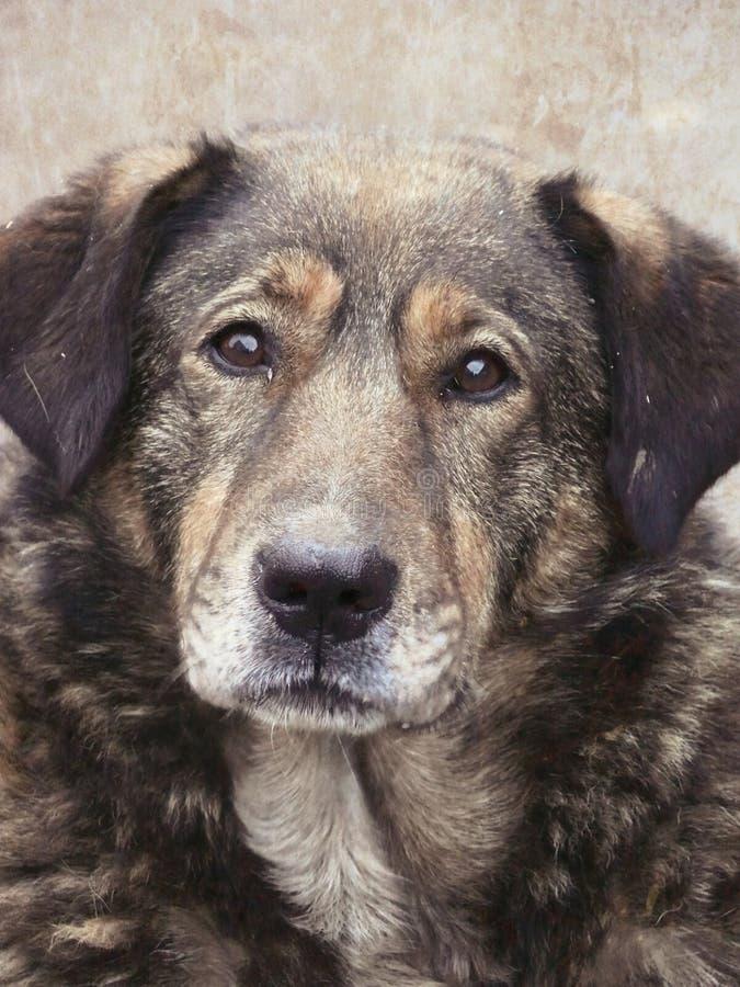 Daklozen. Verdwaalde hond. Een hoofd van een hond. royalty-vrije stock afbeelding
