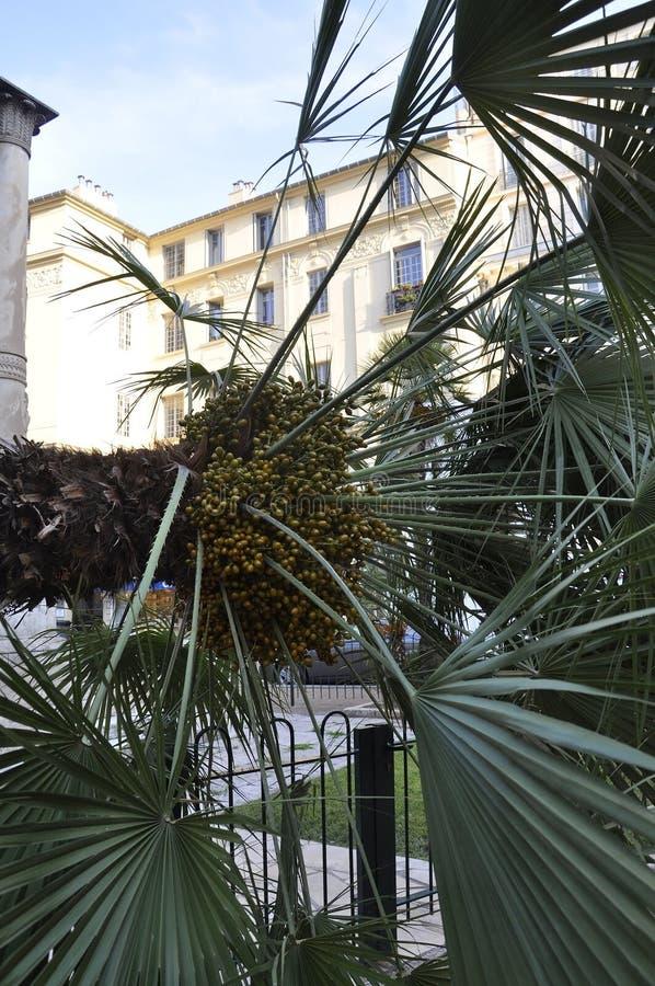 Daktylowej palmy gałąź zamknięta w górę Jardin Albert parka od Ładnego W Francja w Er fotografia stock