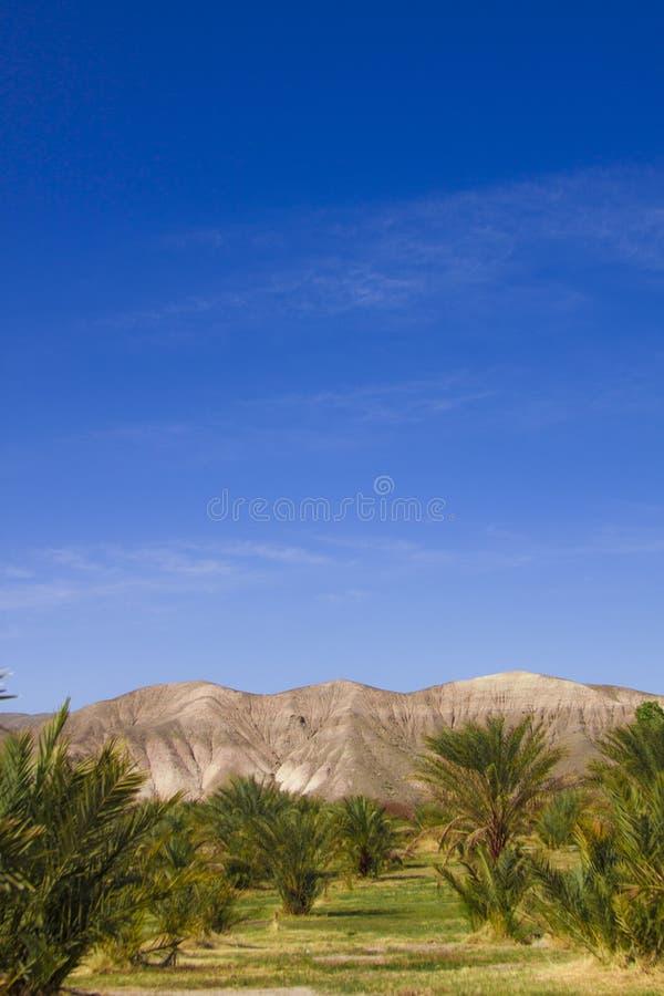 Daktylowi drzewa w Śmiertelnym Dolinnym narodu parku, Kalifornia zdjęcie stock
