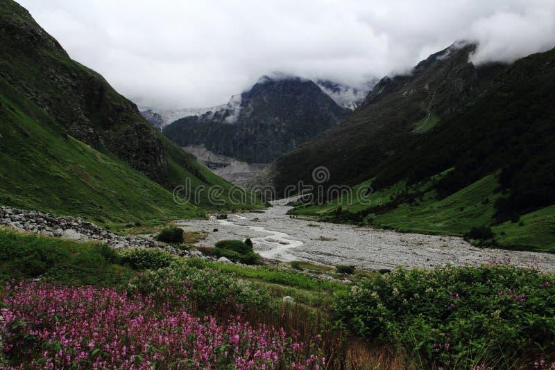 Dal av blommor Uttarakhand Indien arkivbilder