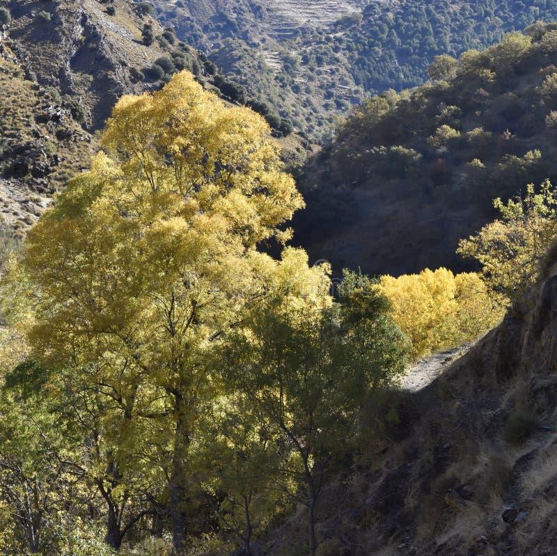 Dal av floden Genil i banan av Sierra Nevada royaltyfri foto