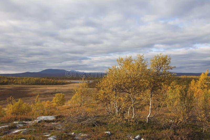 dal för björkfalltrees arkivbild