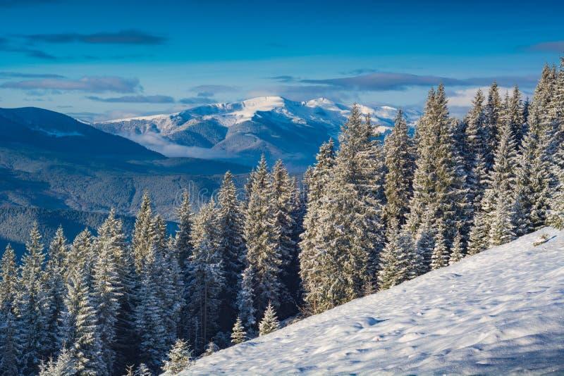 Dal för Carpathian berg som täckas med ny snö arkivbilder
