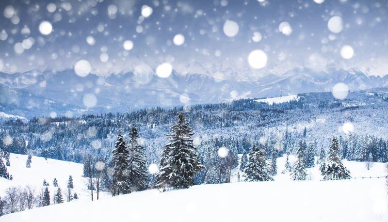 Dal för höga berg som täckas av snö royaltyfri fotografi