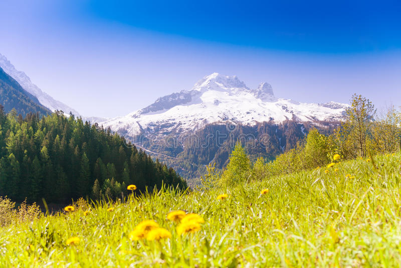 Dal med gula maskrosor nära Mont Blanc arkivfoto