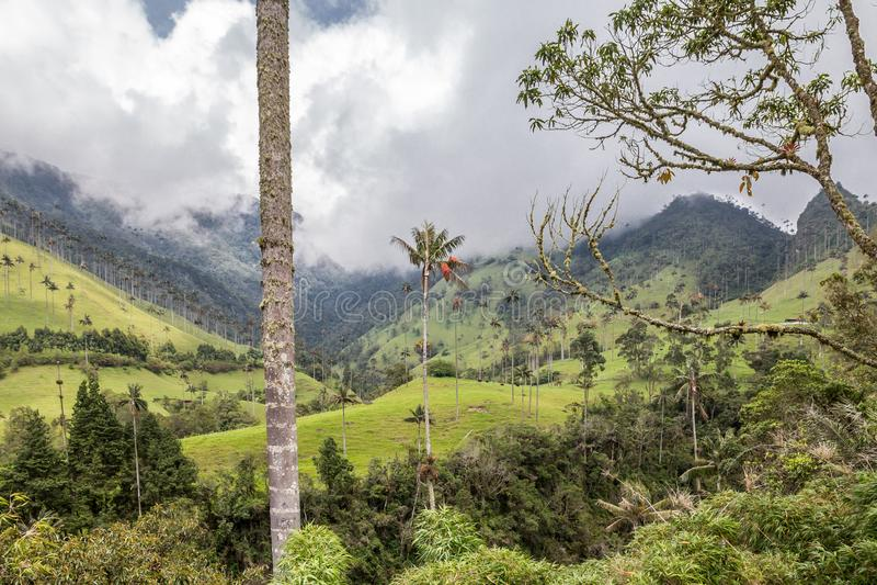 Dal och palmträd för Colombia ` s Cocora royaltyfri foto