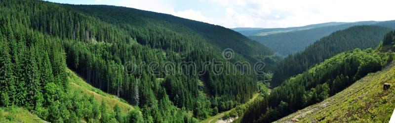 Dal och skog arkivbild