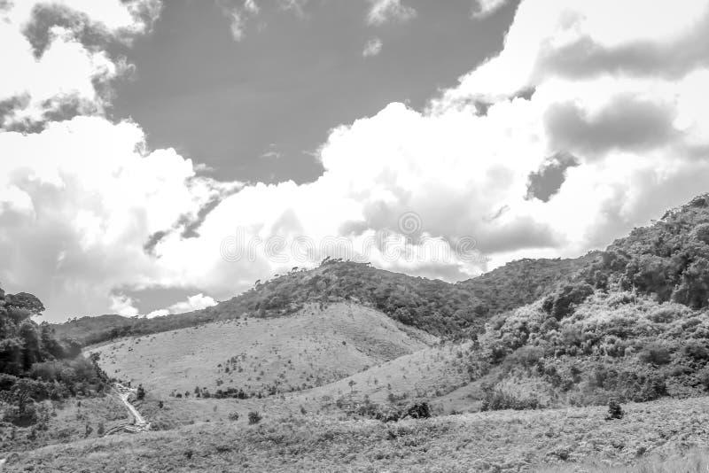 Dal på Horton slättar, Sri Lanka royaltyfri fotografi
