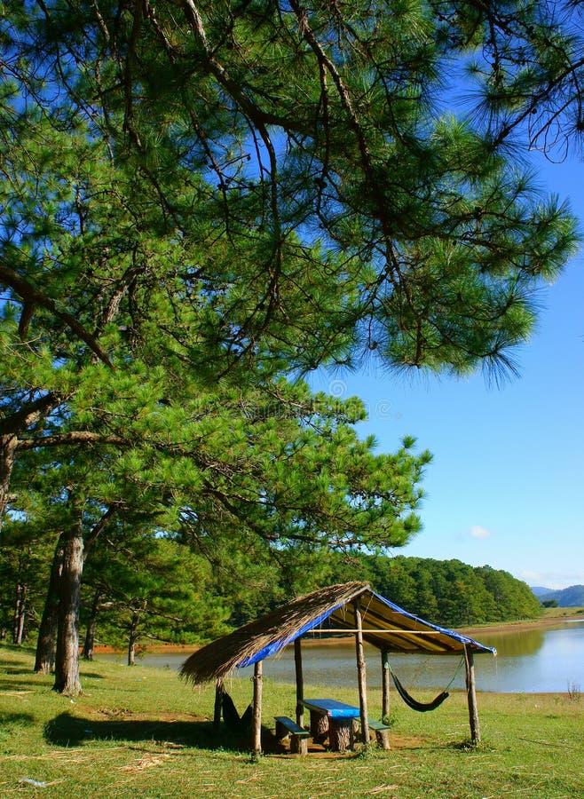 Dalat, Suoi Vang, viaggio, abetaia, ecoturismo fotografie stock