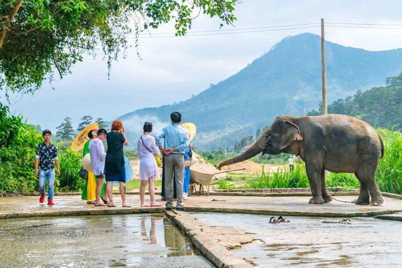 DALAT, VIETNAM - 15 APRILE 2019: I turisti alimentano un elefante durante un giro in Dalat Vietnam fotografia stock libera da diritti