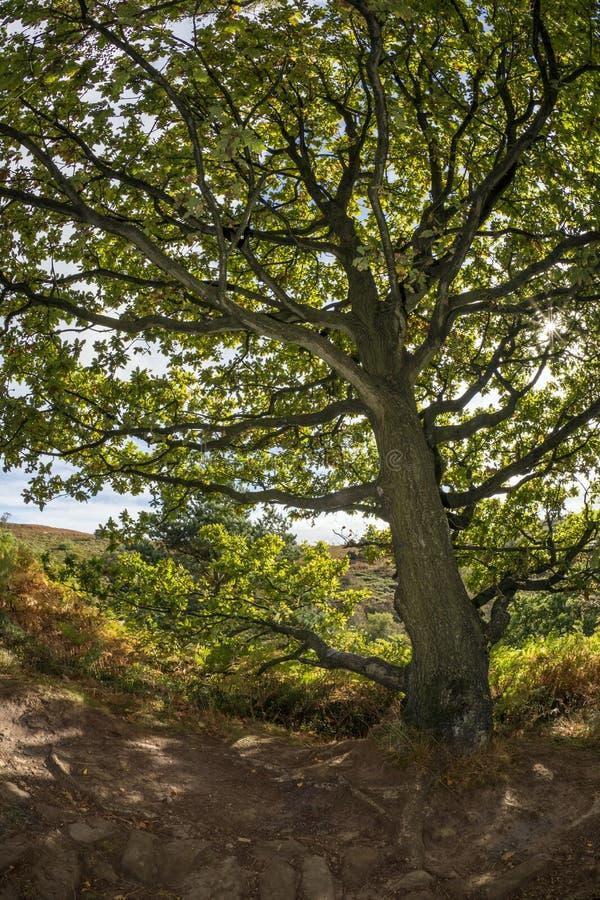 Dalby森林-北约克-英国 免版税库存图片