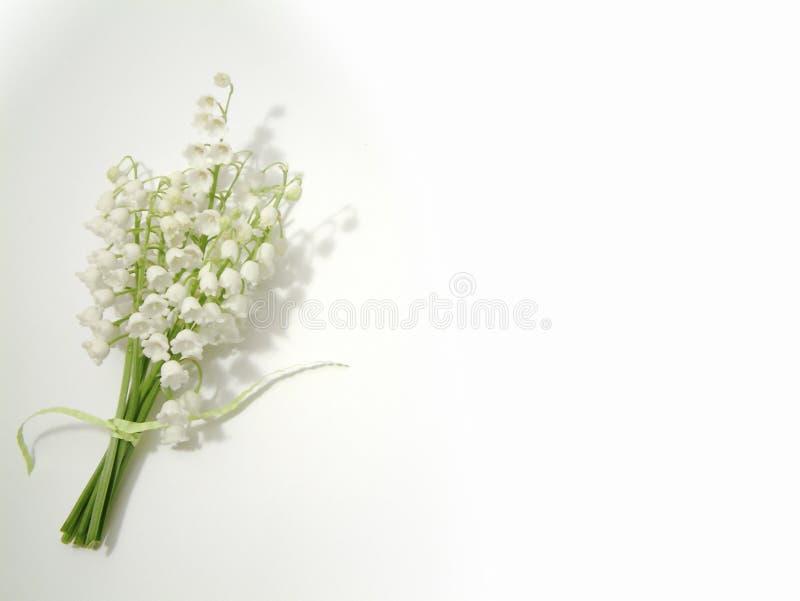 dale lily obrazy royalty free