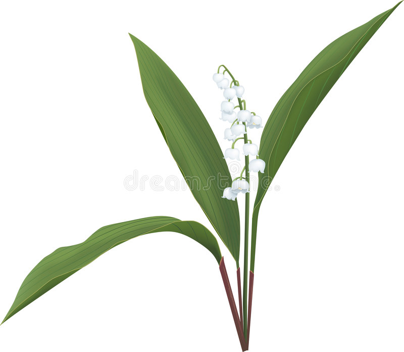dale lily ilustracji