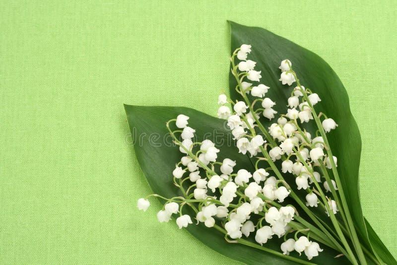 dale lily obraz royalty free