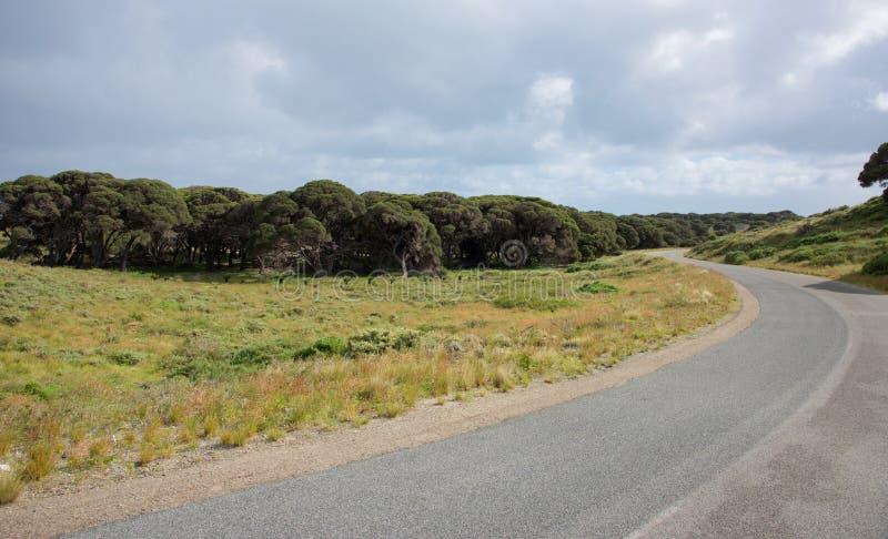 Daleka jezdnia przy Rottnest wyspą fotografia royalty free