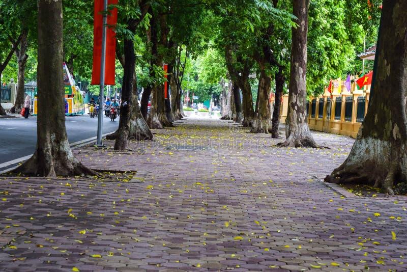 Dalend seizoen in Ha Noi, Vietnam royalty-vrije stock afbeeldingen