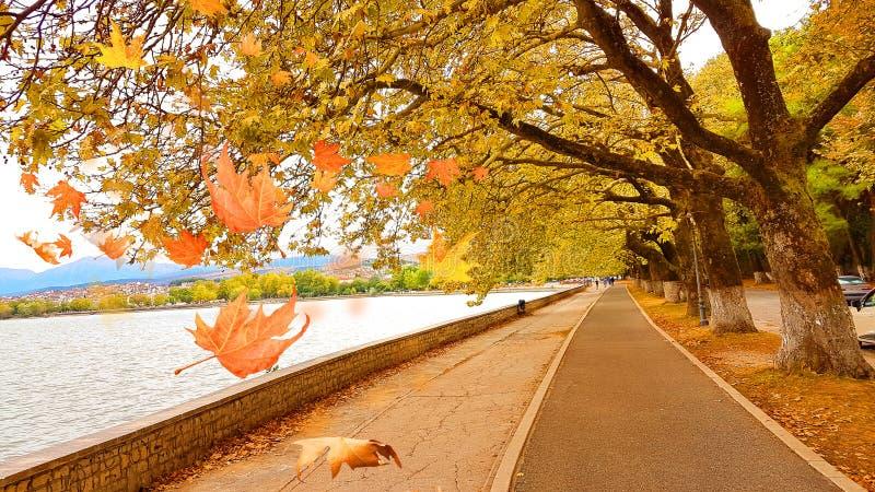 Dalende bladeren in de stadsmeer Pamvotis Epirus Griekenland van Ioannina royalty-vrije stock fotografie