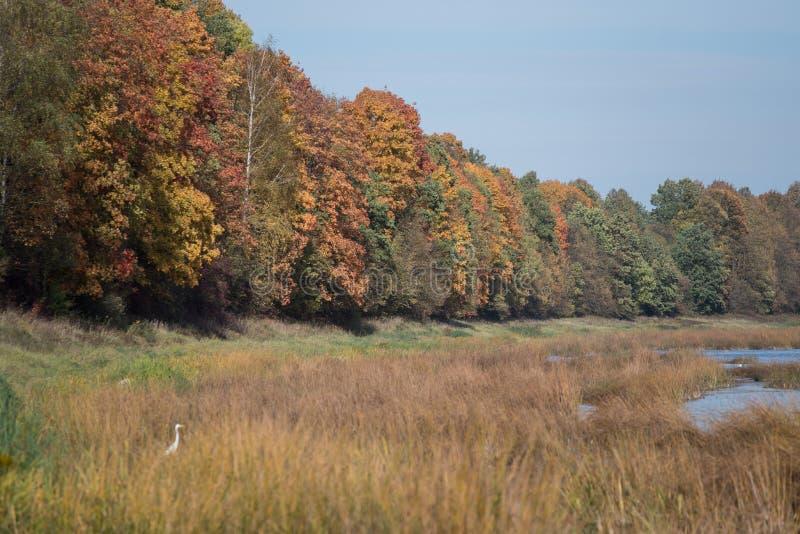 Dalende bladeren natuurlijke achtergrond stock afbeeldingen