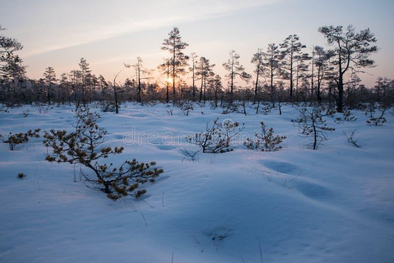 Dalende bladeren natuurlijke achtergrond Mooie zonsopgang in de winter stock foto