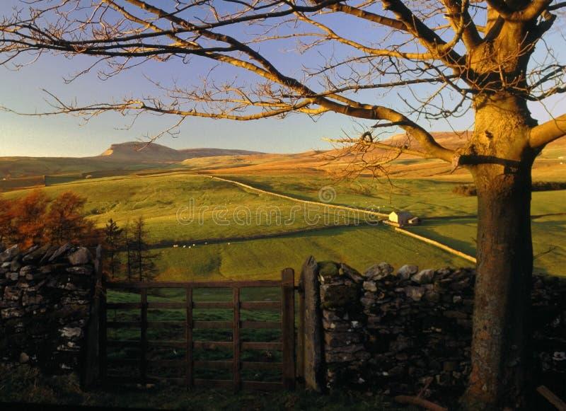 Dales de Yorkshire fotografia de stock