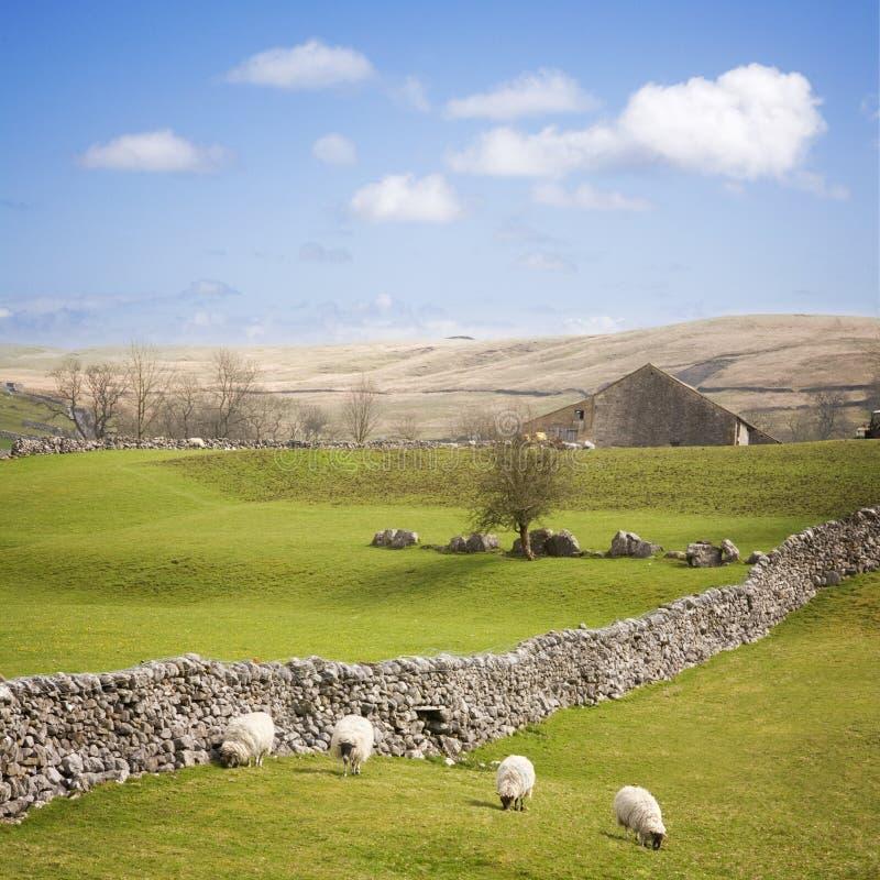 Dales de Yorkshire com a parede de pedra seca imagens de stock
