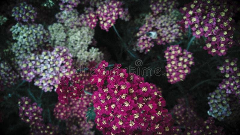 Dalfärgblommor arkivbilder