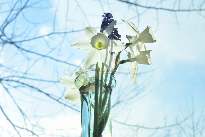Dalia del ` en los brotes de flor del ` de la mañana en florero de la ventana foto de archivo libre de regalías