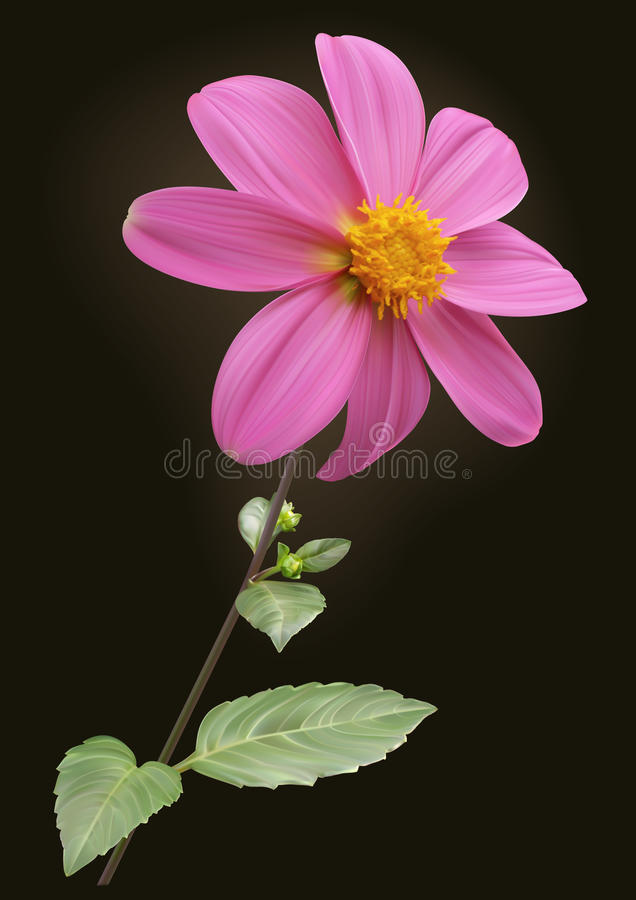 Dalia różowy kwiat ilustracja wektor