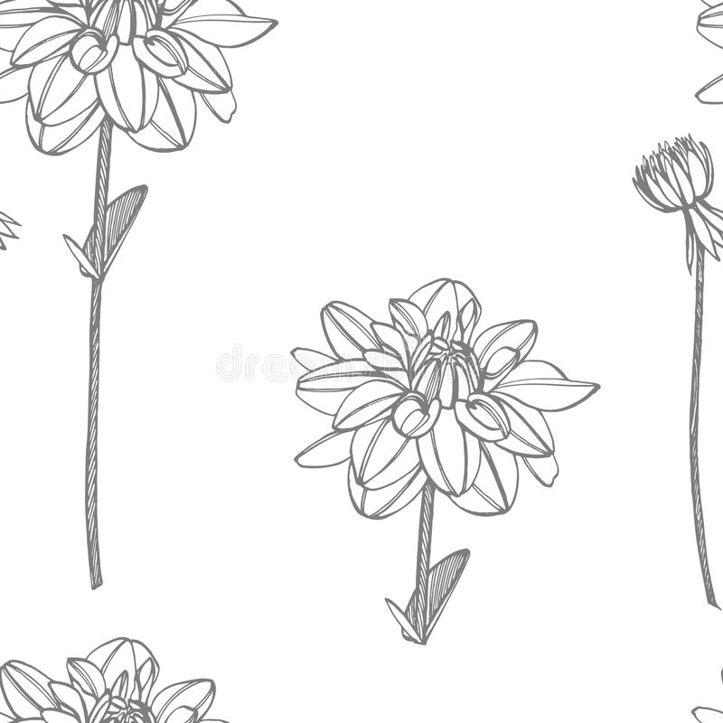 Dalias a mano de la tinta Elementos florales Ejemplos gráficos de las flores Ejemplo bot?nico de la planta Vintage medicinal libre illustration