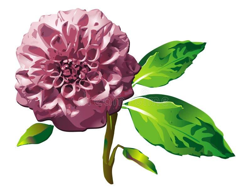 dalii kwiatu menchie ilustracja wektor