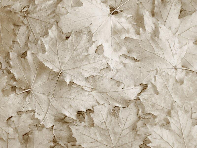 Daling/de Herfstbladerenachtergrond - Voorraadfoto's stock afbeeldingen