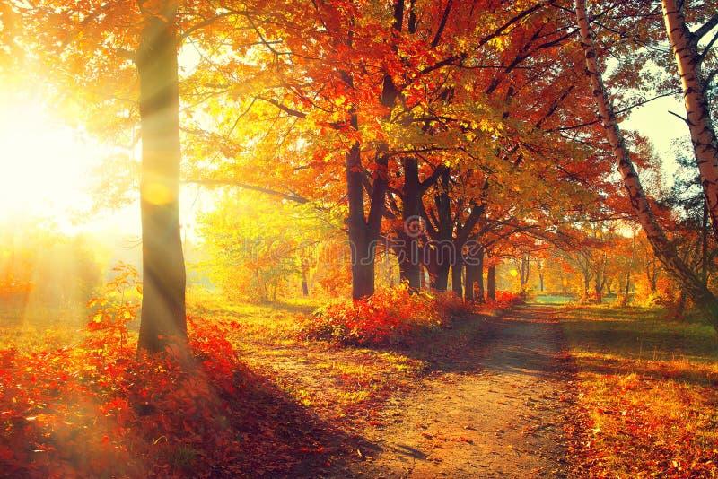 Daling De herfstpark royalty-vrije stock afbeeldingen