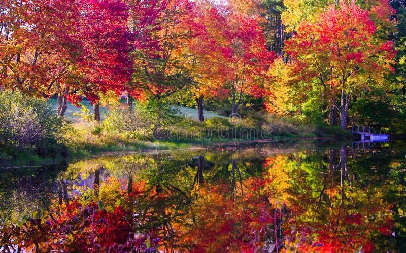 Daling gekleurde bomen langs rivier royalty-vrije stock foto's